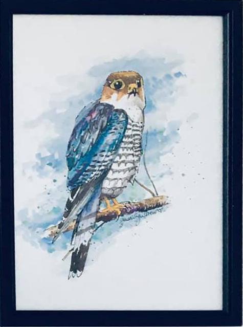 mt15   Falcon