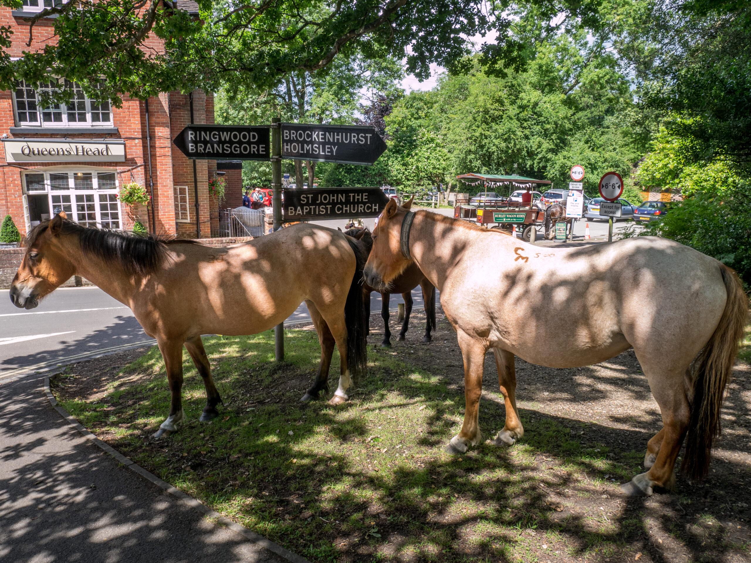 Burley Ponies | Burley
