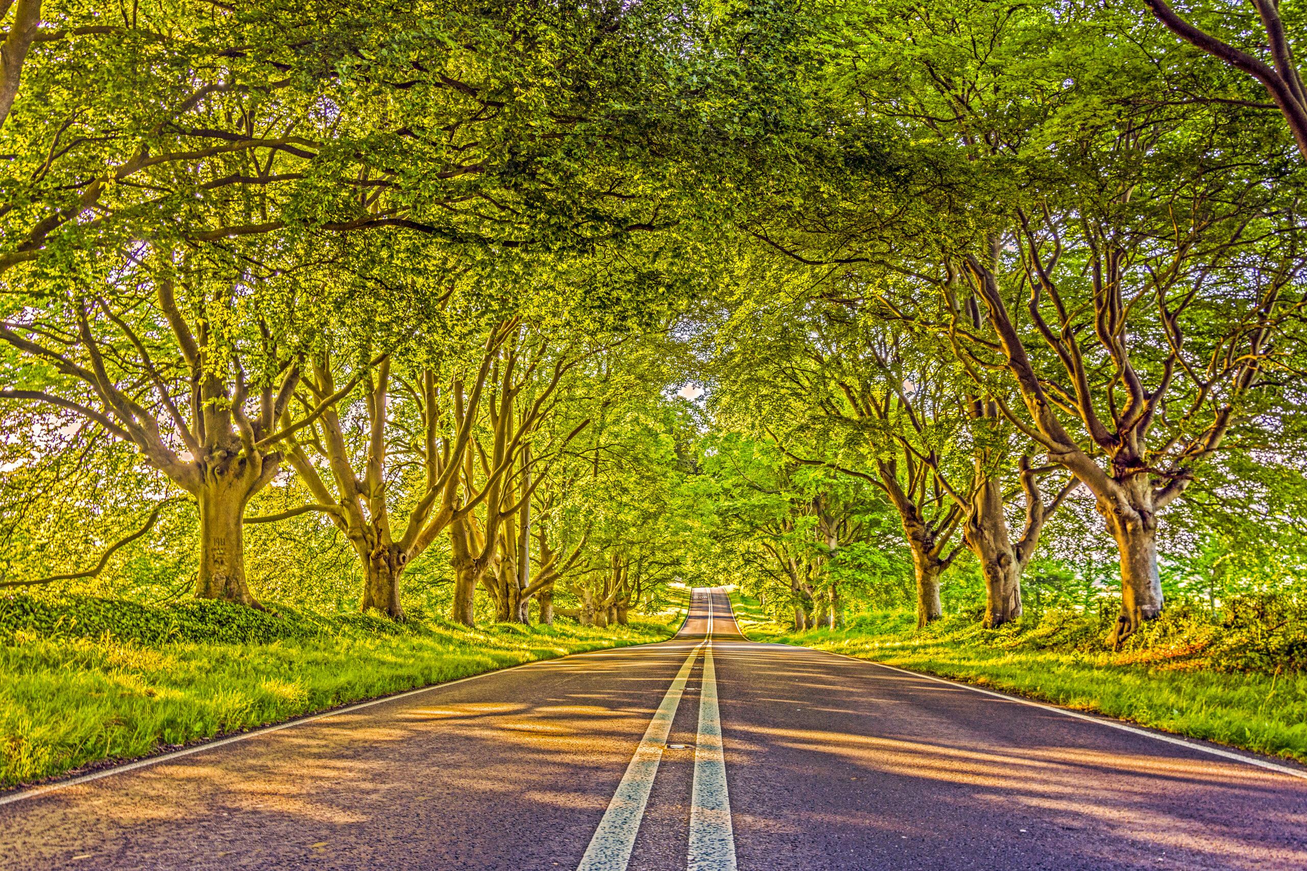 Badbury Rings Avenue, Wimborne Minster, Dorset   Badbury Rings