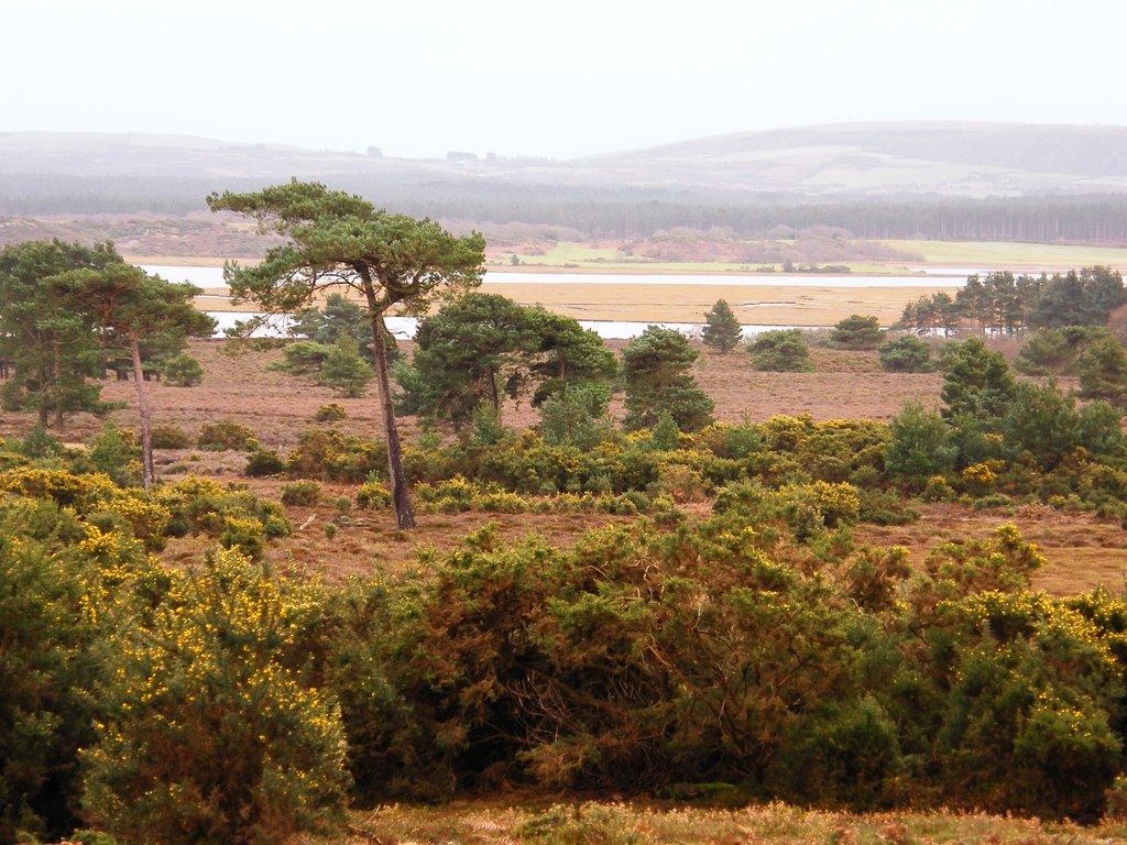 Arne   Isle of Purbeck