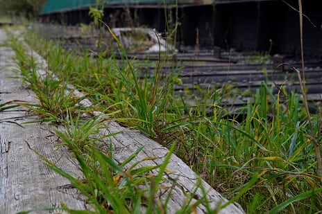 Disused Railway line on Castleman Trailway | Castleman Trailway