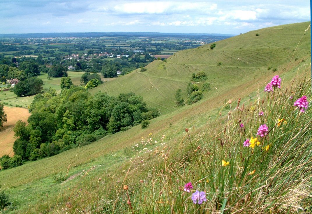 Hambledon-Hill-by-Mark-Simons-1071×735-1 | Hod Hill