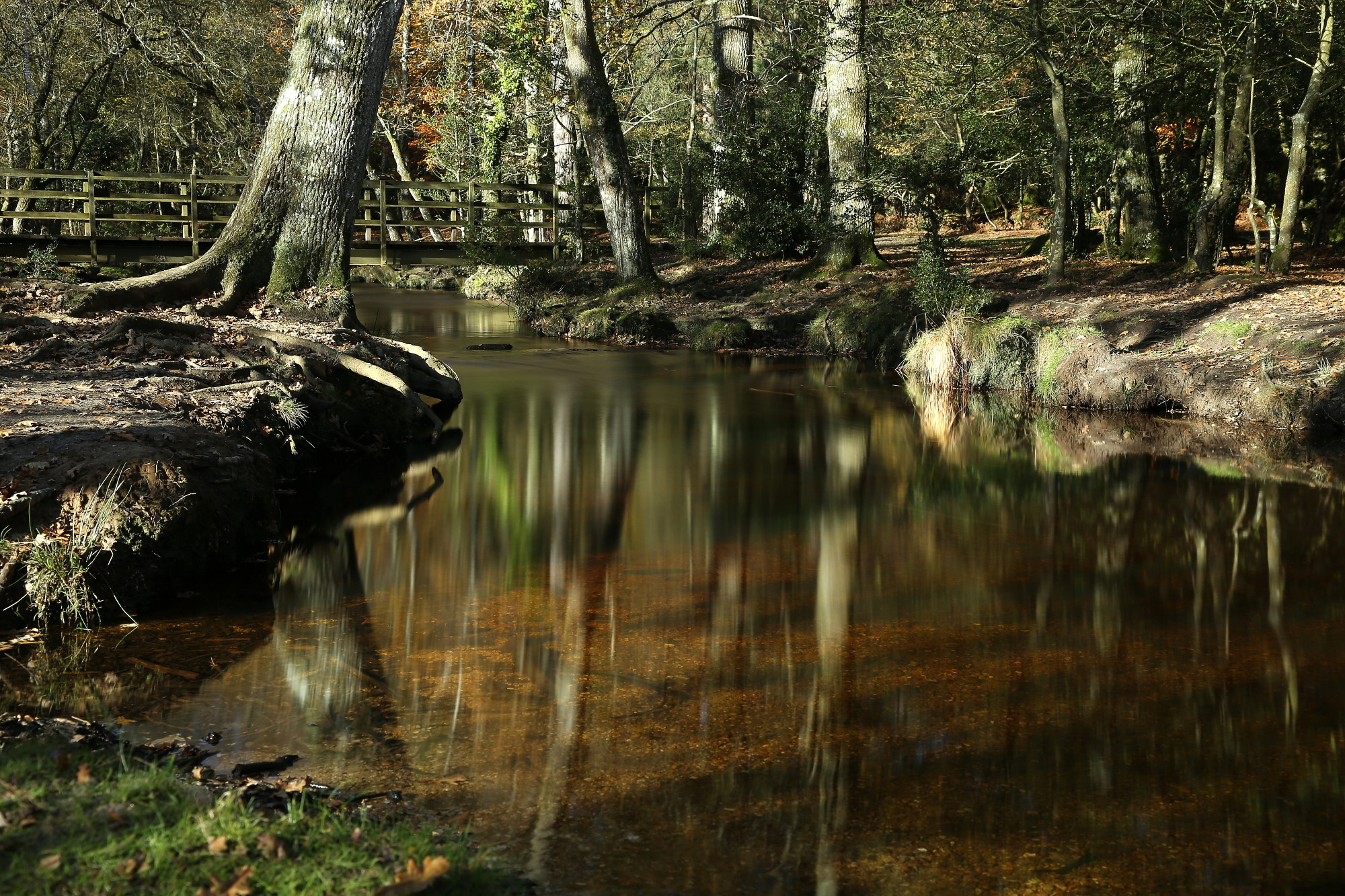 New Forest pool | The Monmouth Rebellion in Dorset