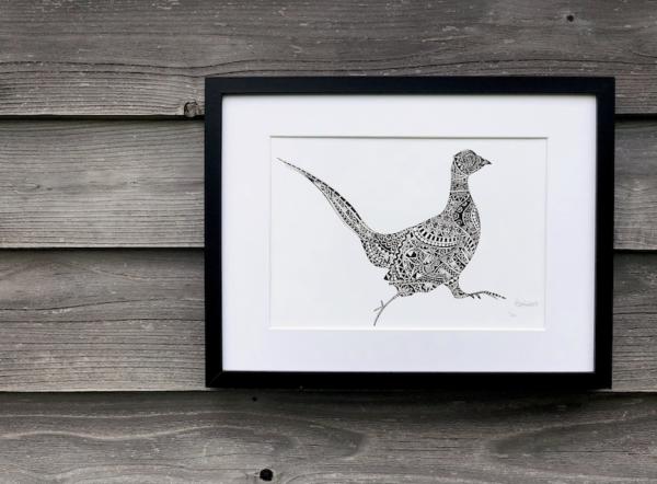 Pheasant TLCS   Mr Pheasant