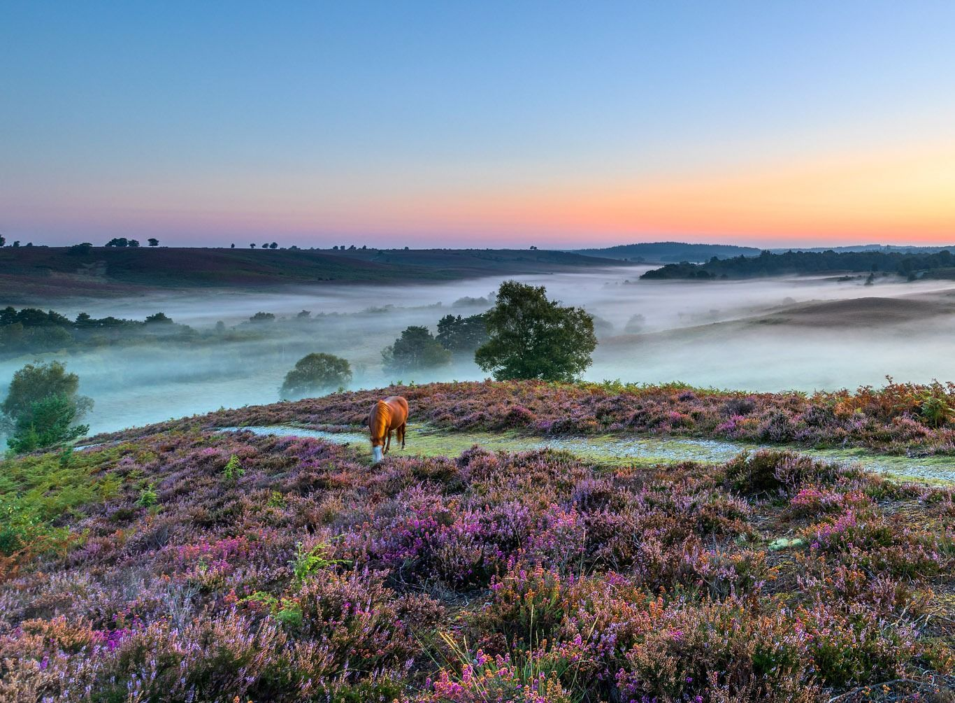 homepage-hero-image-smaller | The New Forest