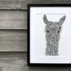 llama TLCH | The Hedgehog
