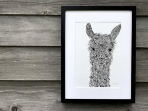 llama TLCH | The Llama