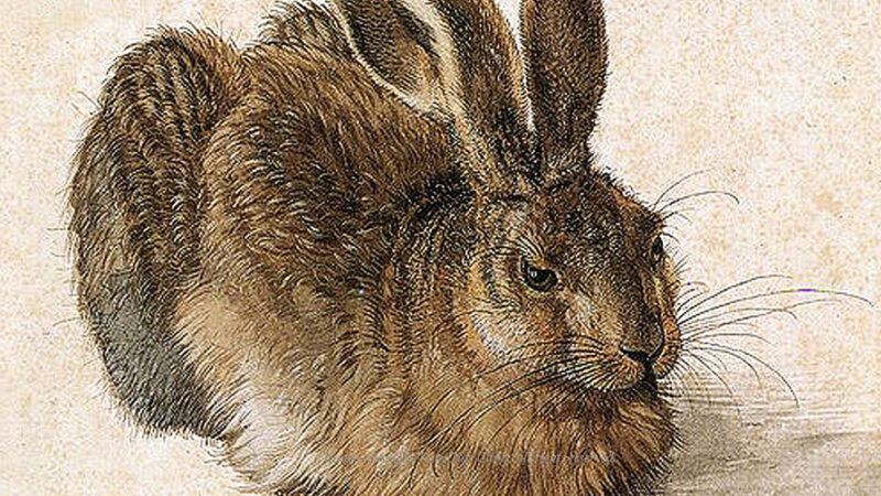 Drawing of a hare by Durer   curated journeys