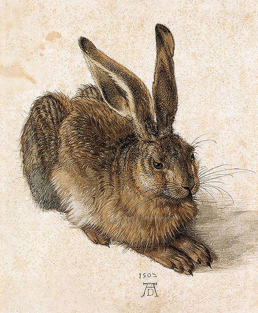 Drawing of a hare by Durer | Hares in Myth and Legend: a journey to Cranborne Chase