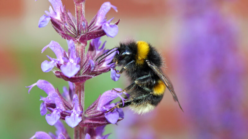 Bumble bee by Tanya Hart   curated journeys
