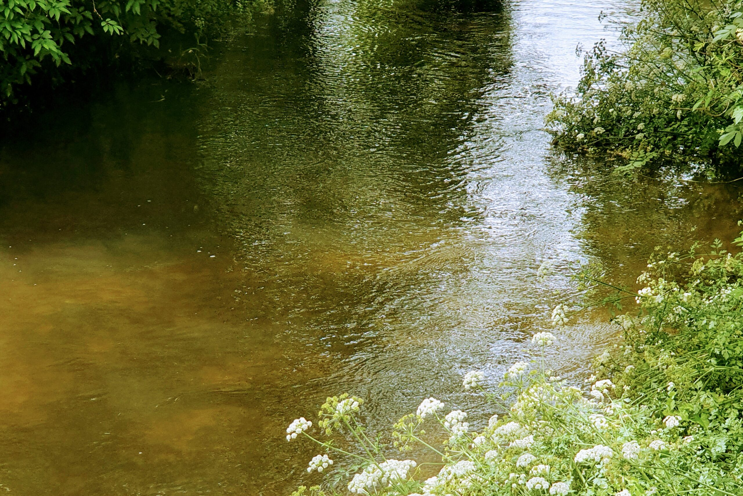 """20210626_140530_2-1   """"Water people""""… salmon … and the River Frome"""