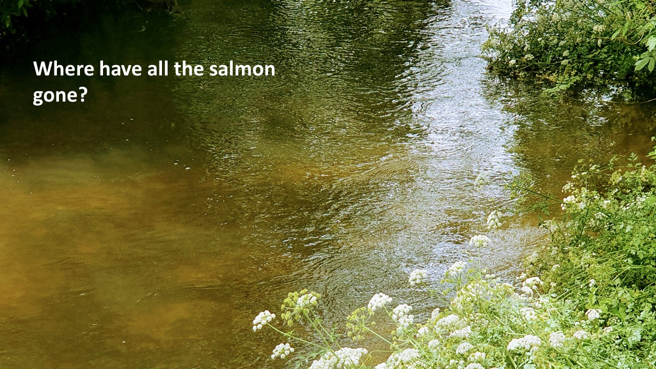 Slide19 | Salmon and people: connections