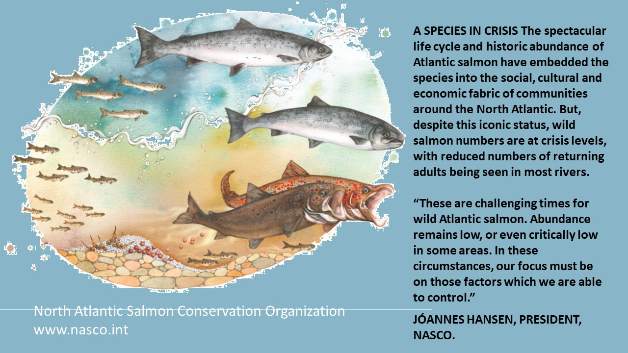 Slide20 | Salmon in crisis on the River Frome and world wide