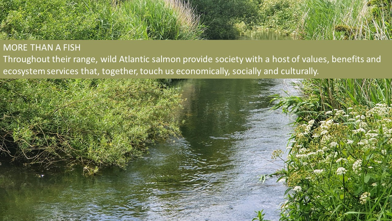 Slide24 | Intervention programmes to help salmon numbers