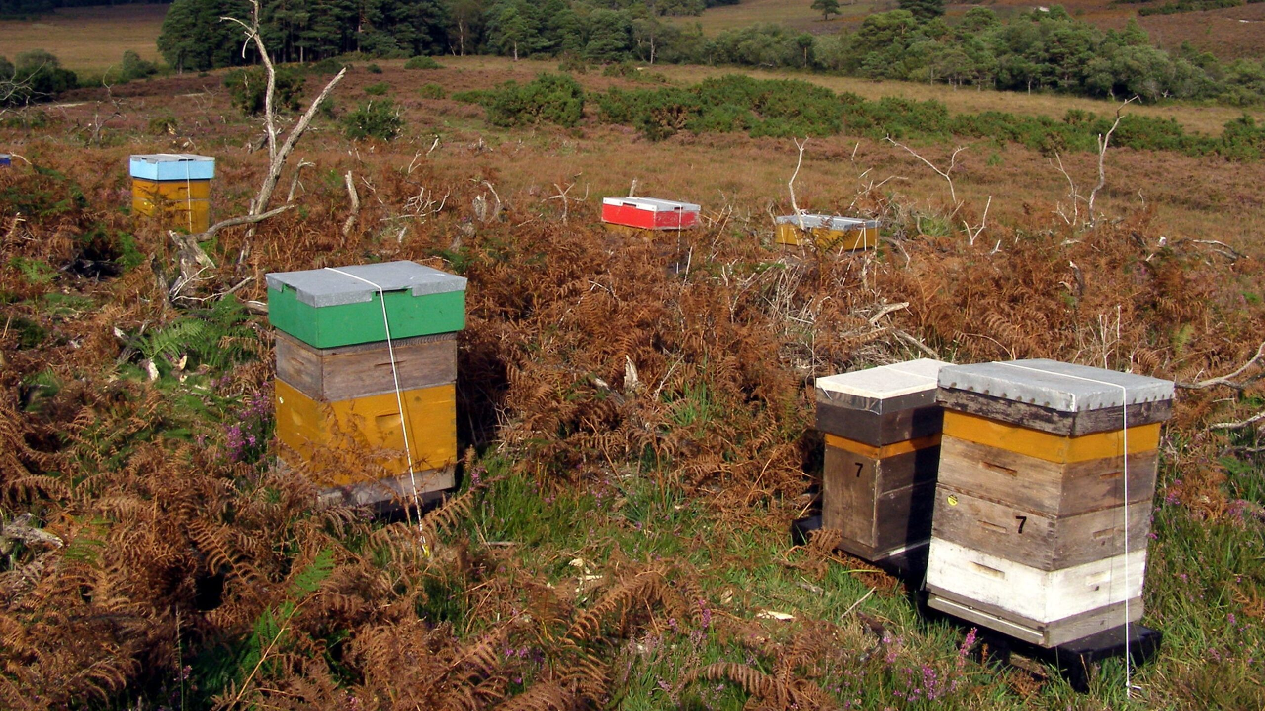 Hives and the Forest Heathlands | River Avon in Winter