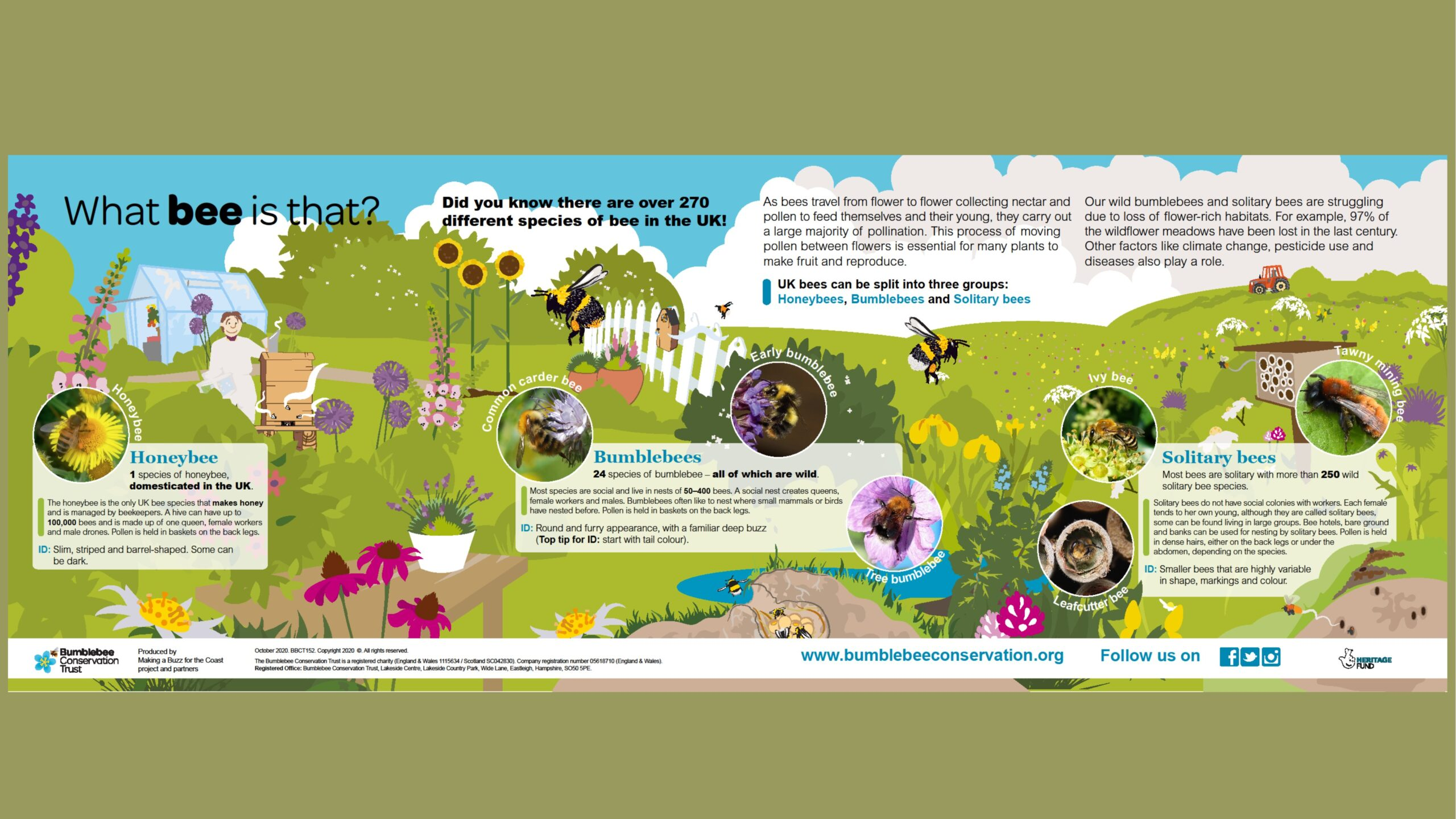 Native Bee Species | Busy Bees at work: and other pollinators in our landscape