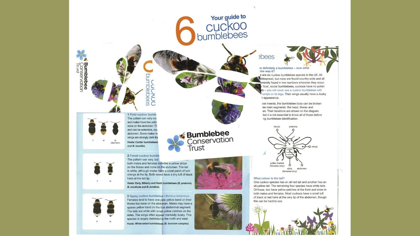 Cuckoo Bees | Busy Bees at work: and other pollinators in our landscape