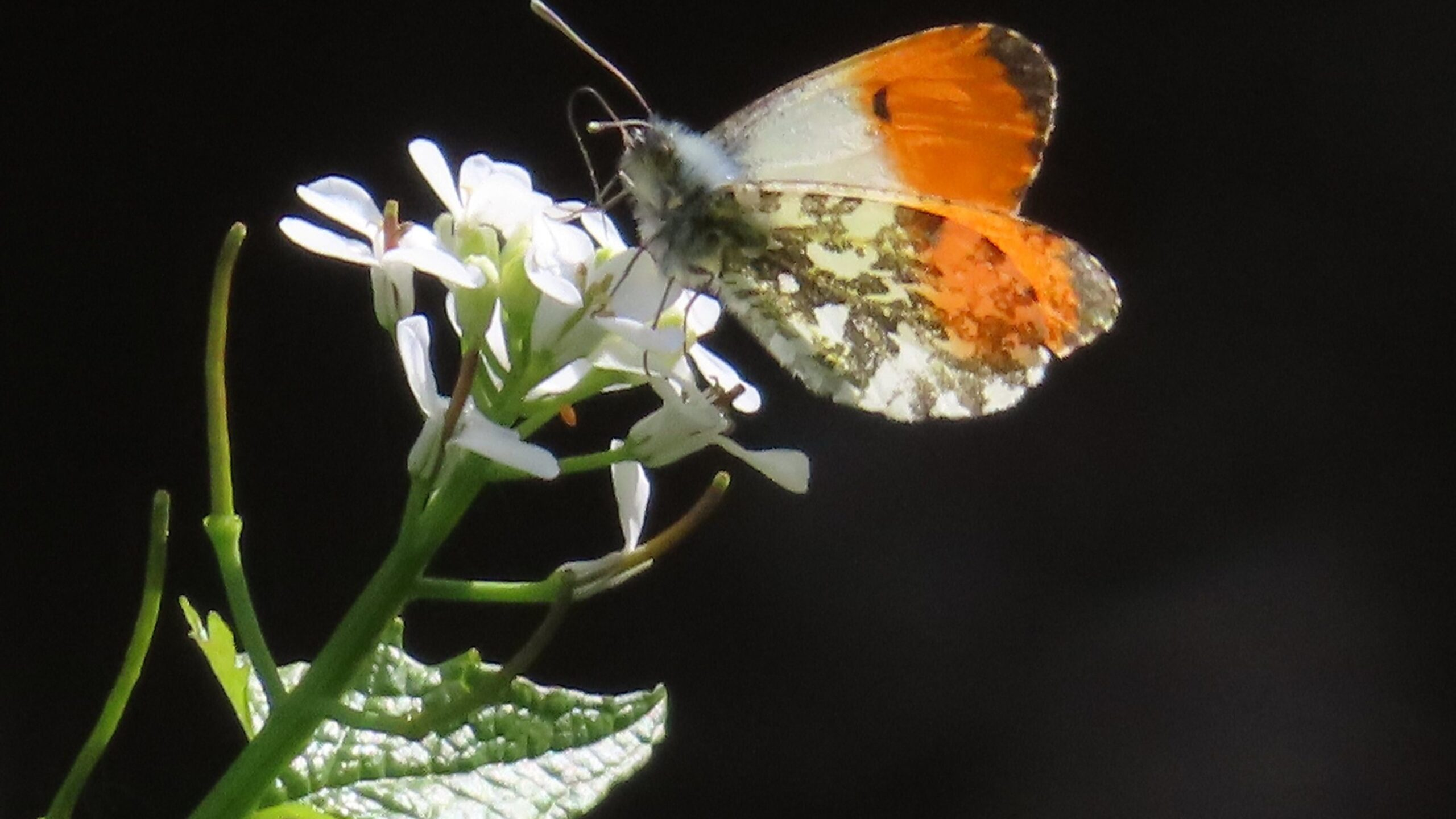 Other Pollinators | Busy Bees at work: and other pollinators in our landscape